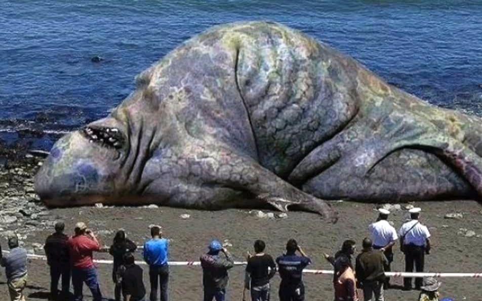 海洋传奇国语_海洋生物的全部相关视频_bilibili_哔哩哔哩弹幕视频网