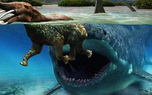 电影巨齿鲨2018预...