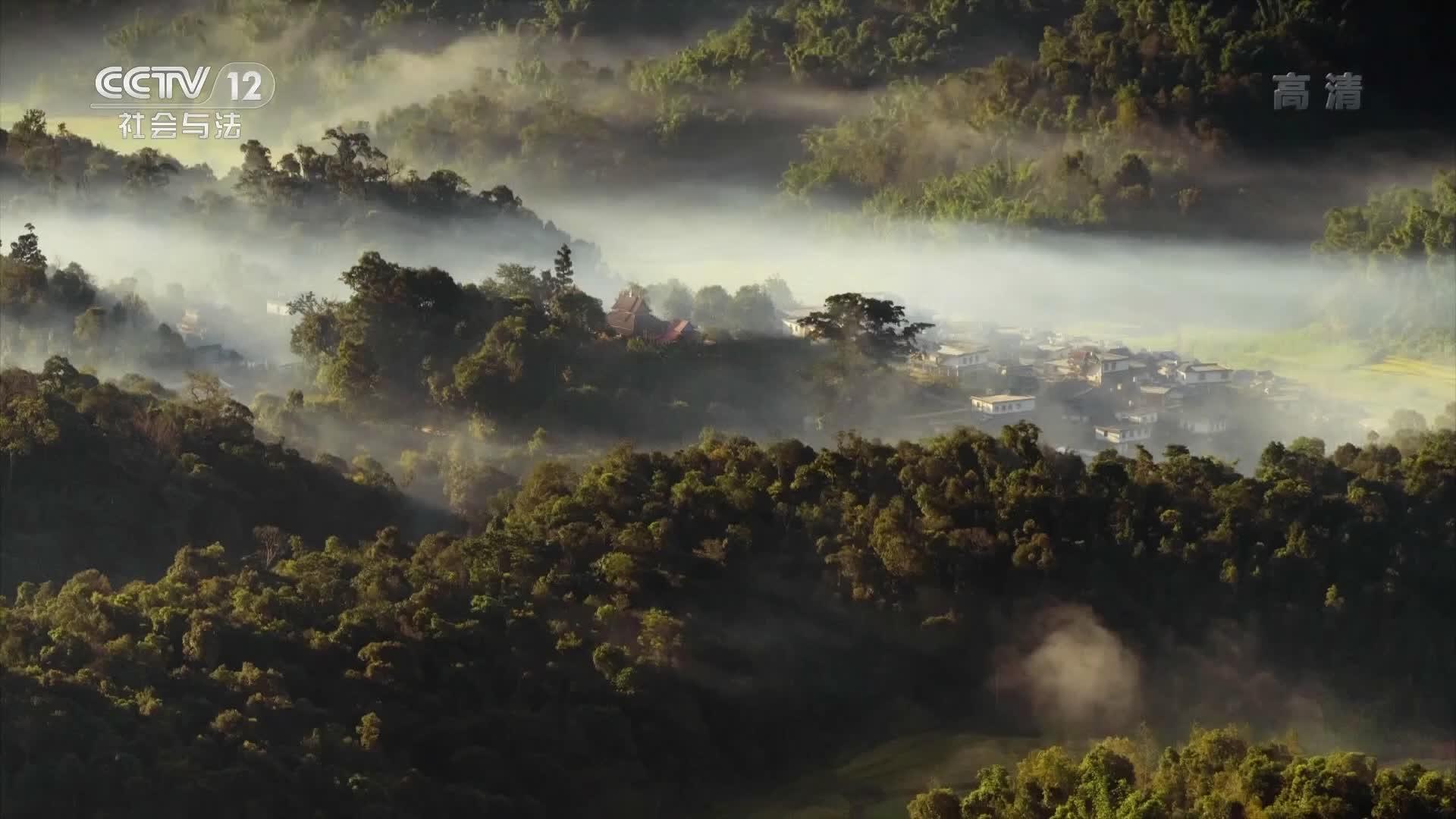 央视广告欣赏-雨林古树茶