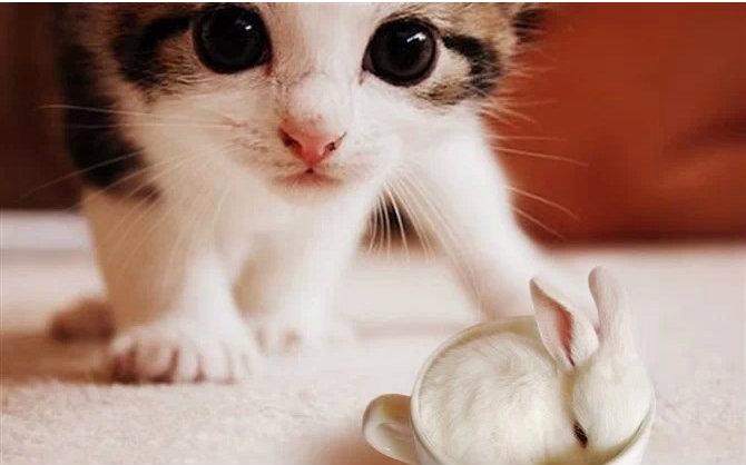 猫咪视频_【猫咪物语】感人mv 视频剪辑