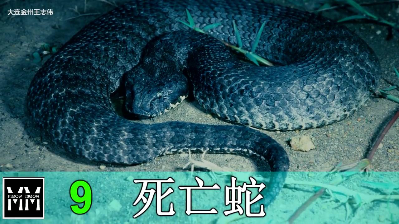 世界十大毒动物_世界10大最毒的毒蛇_哔哩哔哩 (゜-゜)つロ 干杯~-bilibili