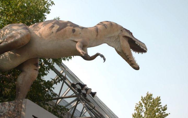 关于恐龙的纪录片_纪录片.世界上最好的恐龙化石.2017[高清][生肉]_科学探索_纪录片 ...