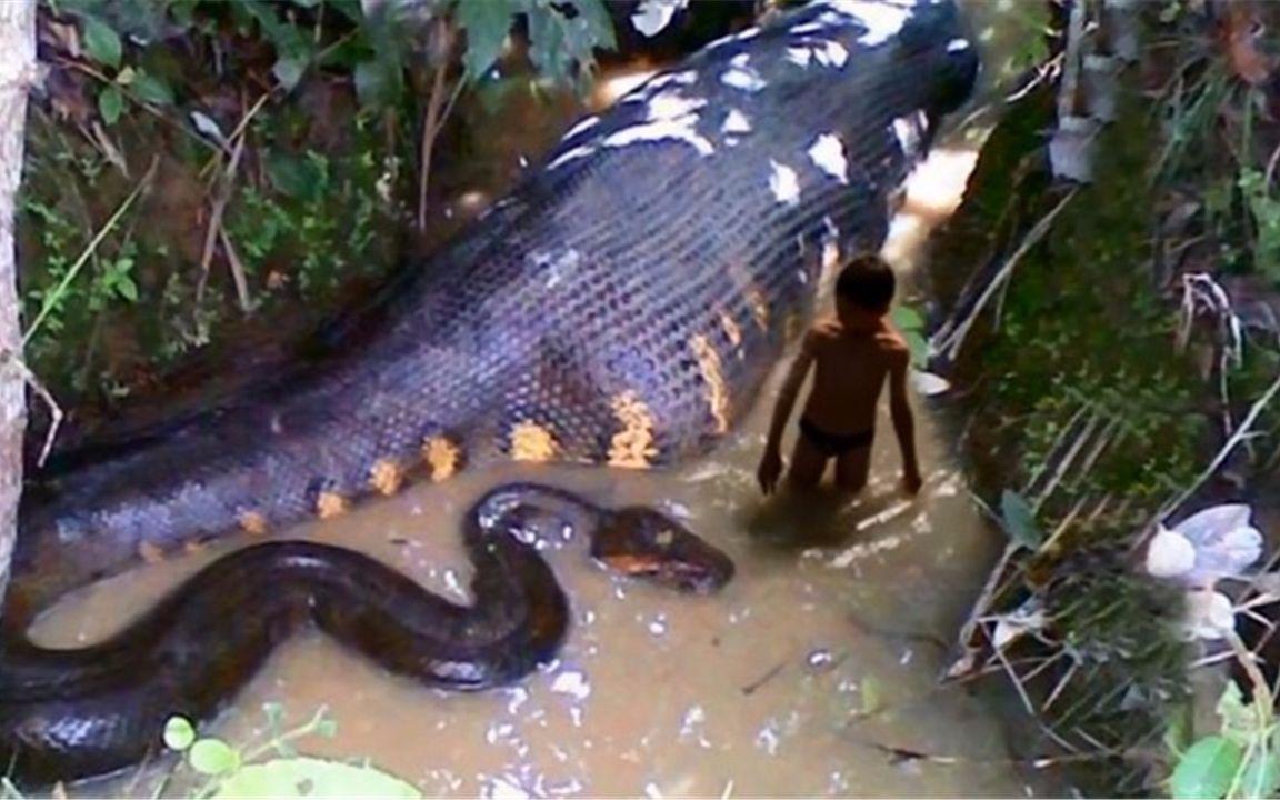 世界上最大五头蛇_世界上最大的蛇,重达225公斤,能1秒把人吞进肚子_哔哩哔哩 (゜ ...