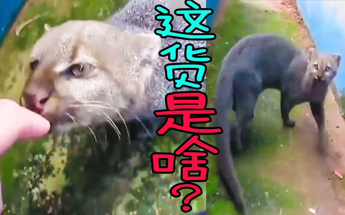 [無碼]快乐到死_捡到一只猫,越养越不对劲,这货是啥啊?_哔哩哔哩 (゜-゜)つロ ...