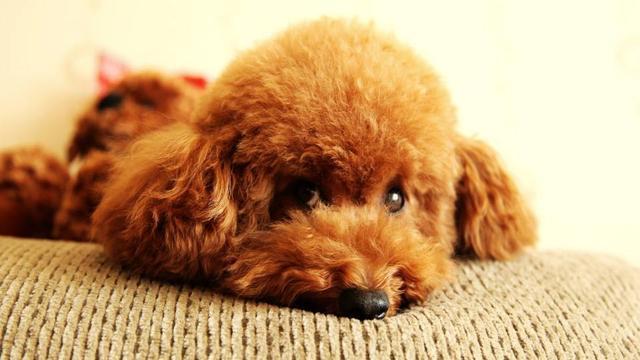 总结:寿命短的狗,主人通常有这些行为,想要狗长寿一个也不能有