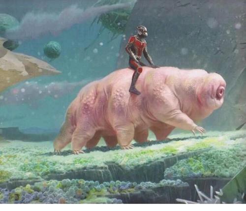 蜘蛛侠:I'm water bear man!