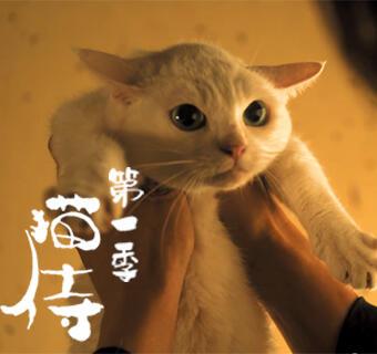 我只是個小貓咪,我什么都不知道!
