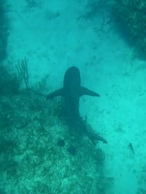 探险加勒比海-与鲨共游