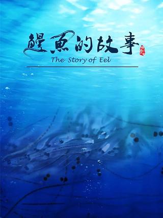 鰻魚的故事